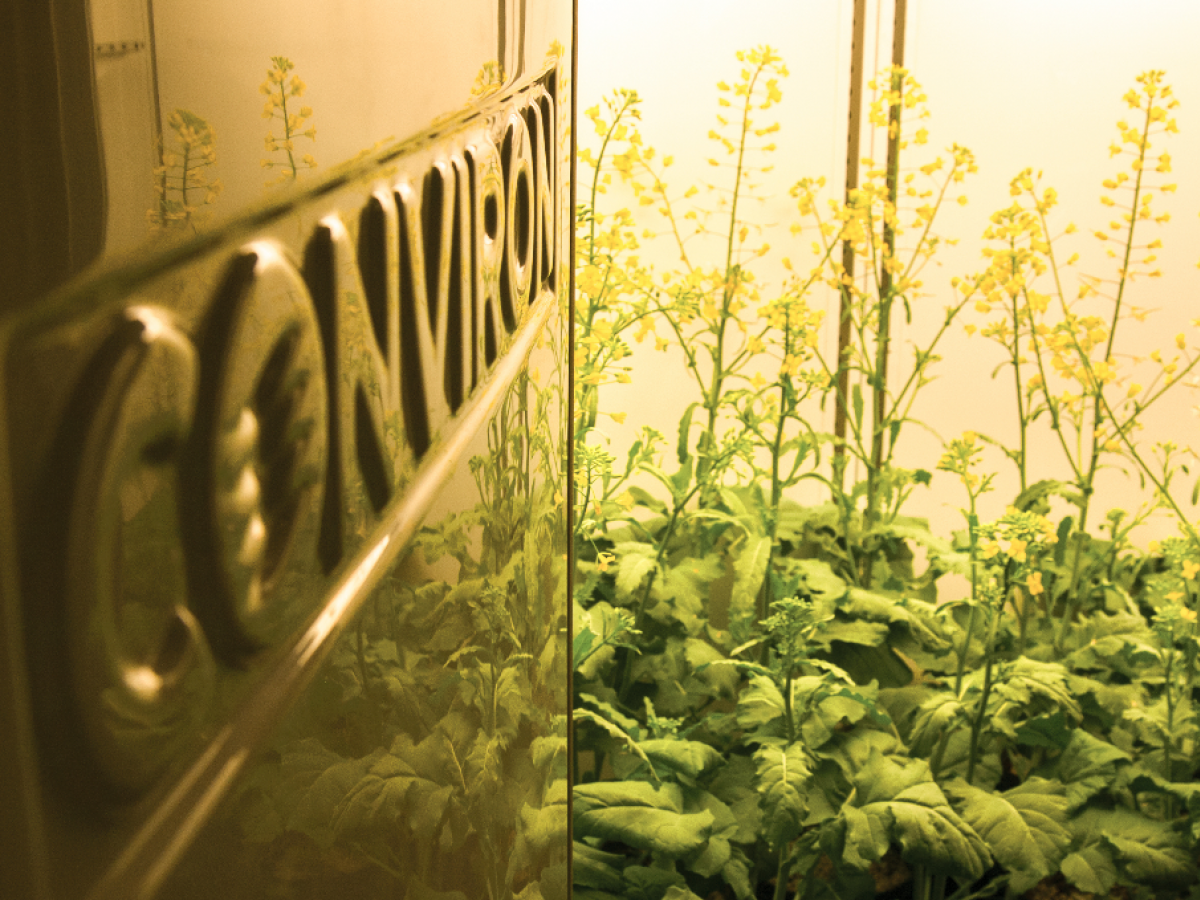 10 Things you should know about Conviron - From recreating prehistoric climates to creating ideal conditions to research plant vaccines, Winnipeg-based Conviron products are everywhere